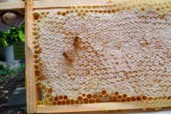 Honung som är klar att skörda,